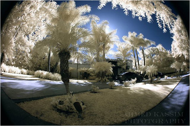 infrared photography by Ahmed Kassim ©