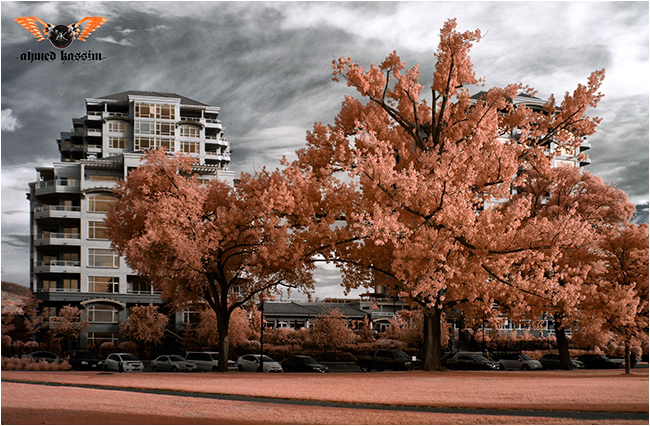 Color infrared of trees and building by Ahmed Kassim ©