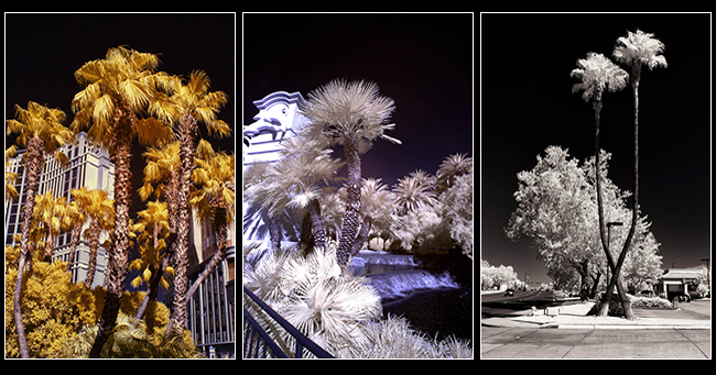 Infrared photos by Ahmed Kassim ©