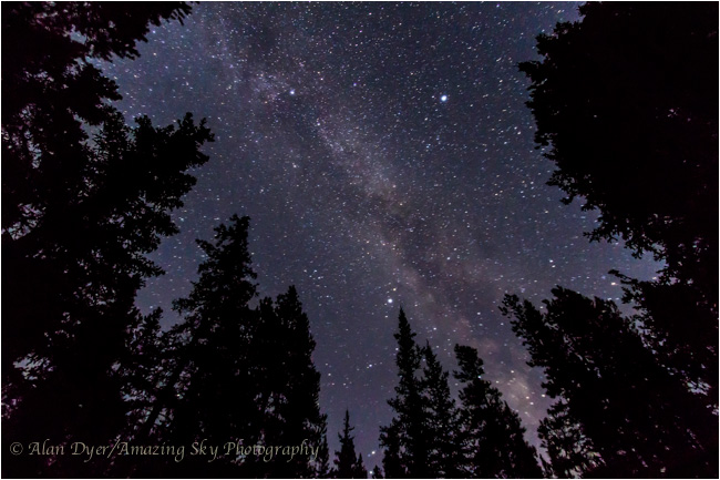 Summer Triangle thru trees consisting of the bright stars, Deneb, Vega and Altair by Alan Dyer ©