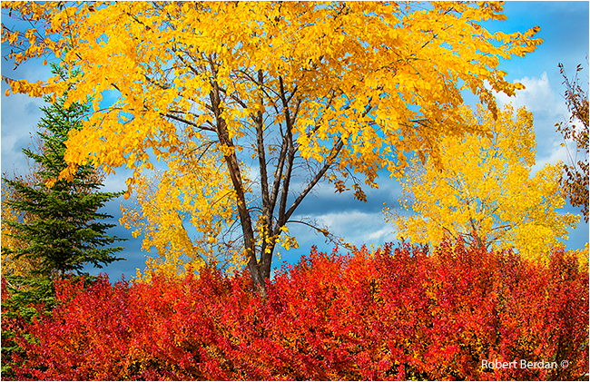 Colourful trees in Autumn in Silver Springs Calgary by Robert Berdan ©