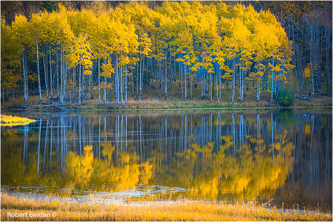 Aspens reflected in pond by Robert Berdan ©