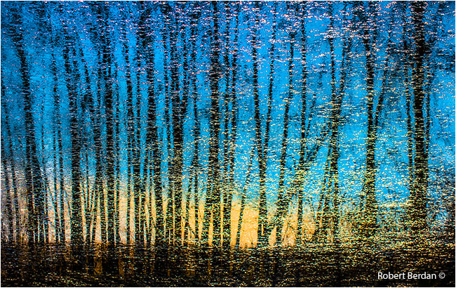 Abstract reflections of trees in pond, reversed image by Robert Berdan