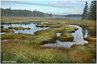 Marsh in fog Mount Desert Island by Bruce Lovelace ©