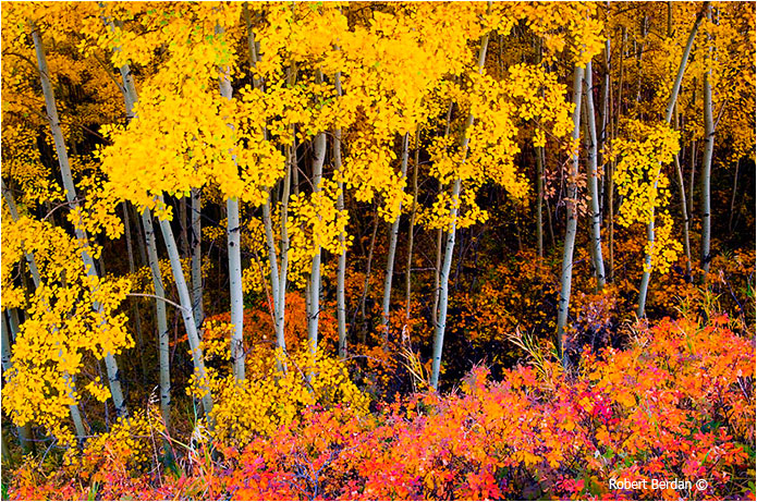 Autumn colors in Calgary by Robert Berdan ©