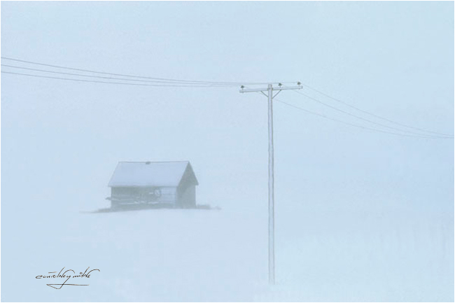 Winter on the Prairie by Courtney Milne ©