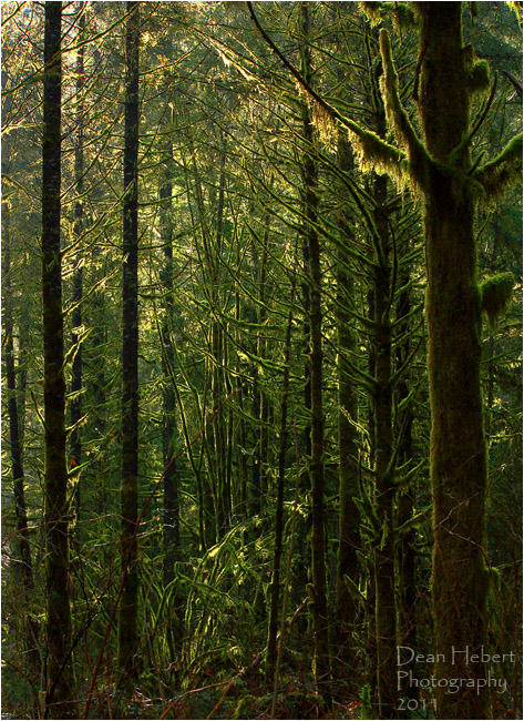 Forest and moss by Dean Hebert ©
