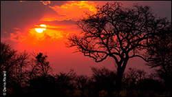 Botswana sunset by Marie-France and Denis Rivard ©