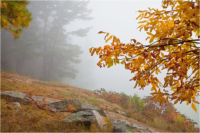 Autumn scene at Lake of the Woods, Ontario in Fog by Robert Berdan ©