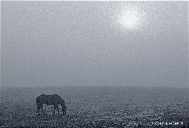 Horse in fog at sunrise, north of Calgary by Robert Berdan ©