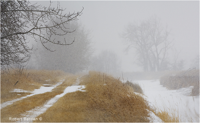 Spring time road and fog, Alberta by Robert Berdan