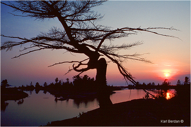 White Pine and sunset at Go Home Bay by Karl Berdan ©