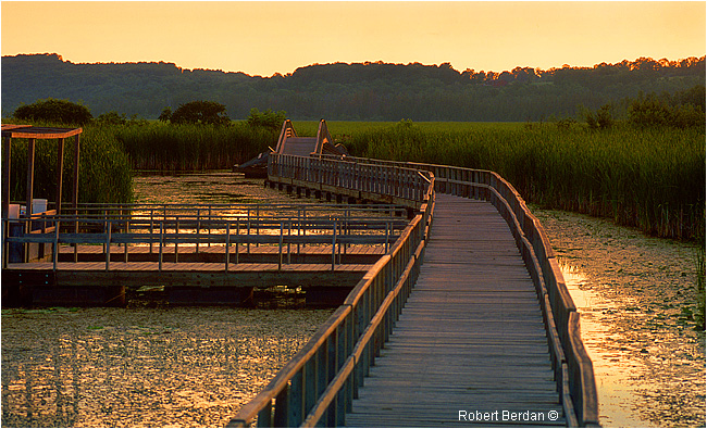 Wye Marsh Board walk near Midland, Ontario by Robert Berdan ©