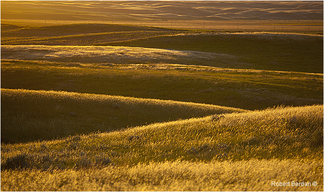 Grasslands National Park by Robert Berdan