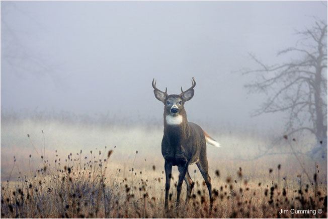 Deer coming out of a thick fog by Jim Cumming ©