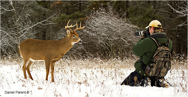 Photographer photographing a Deer by Daniel Parent ©