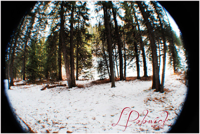 Fisheye photograph of Fish Creek Park, Calgary by Lauren Polowick ©