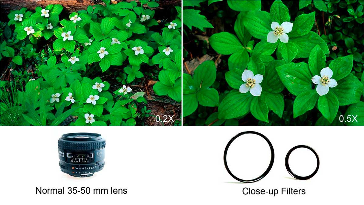 Normal lens versus closeup filters by Robert Berdan ©