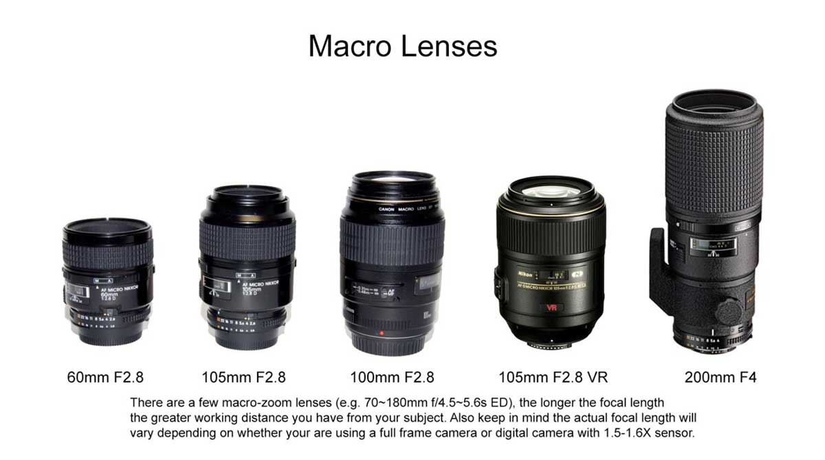 Macro lenses from 60-200 mm focal length by Robert Berdan
