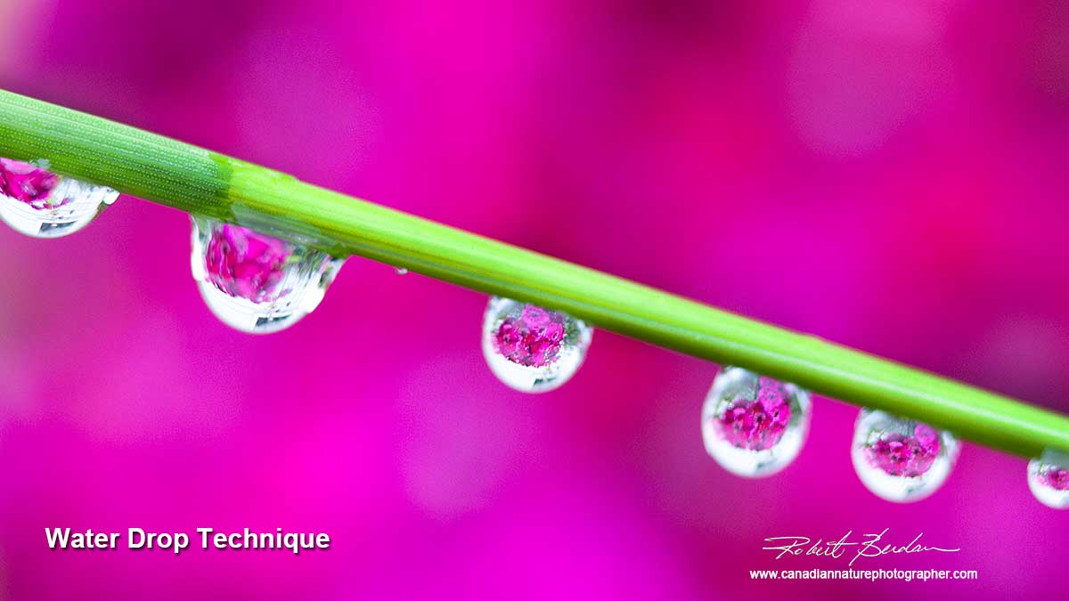Water drop lenses on grass by Robert Berdan ©
