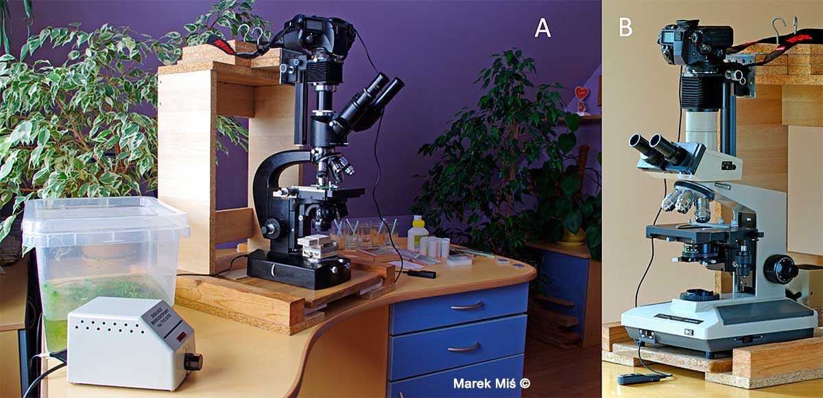 Lumipan microscope and Olympus BH-2 Microscope by Marek Miś ©