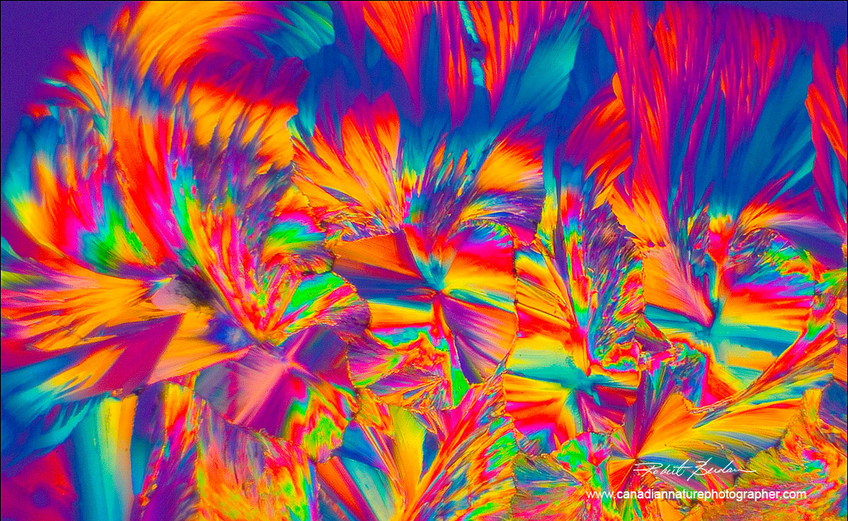 Photomicrograph of Citric acid crystals abstract photo by Robert Berdan ©