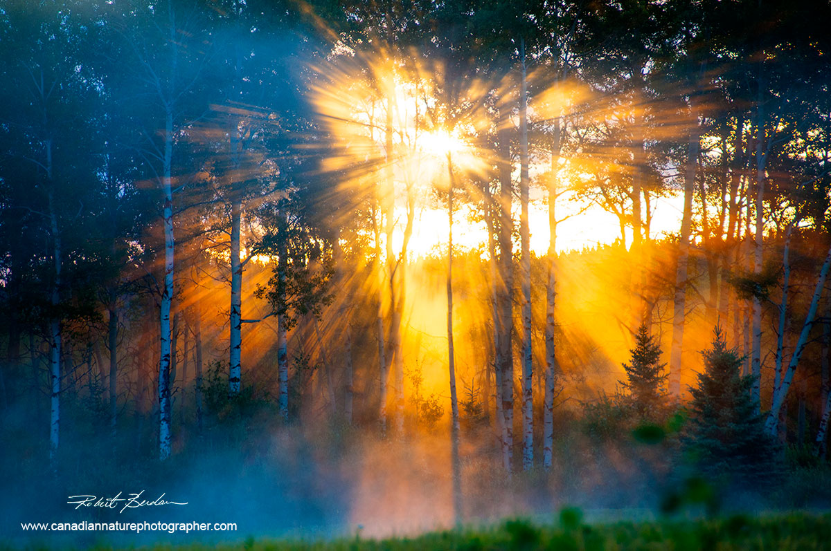 Suns rays through forest by Robert Berdan ©