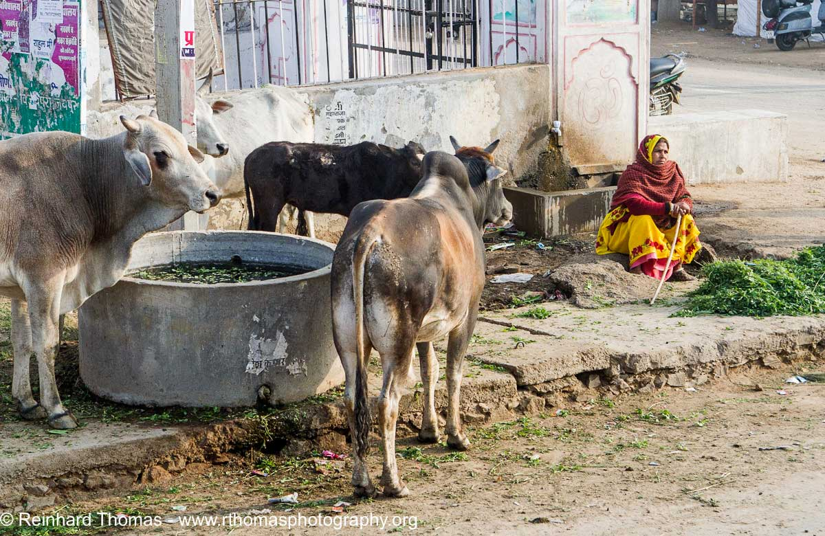 woman are selling feed for the cows in Indian by Reinhard Thomas ©