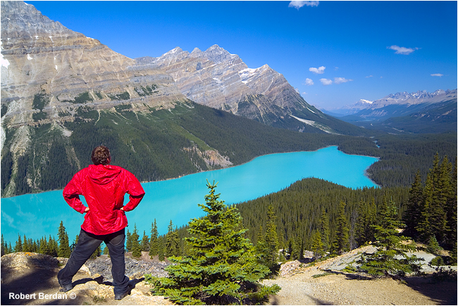 Peyto Lake Jasper National Park by Robert Berdan ©