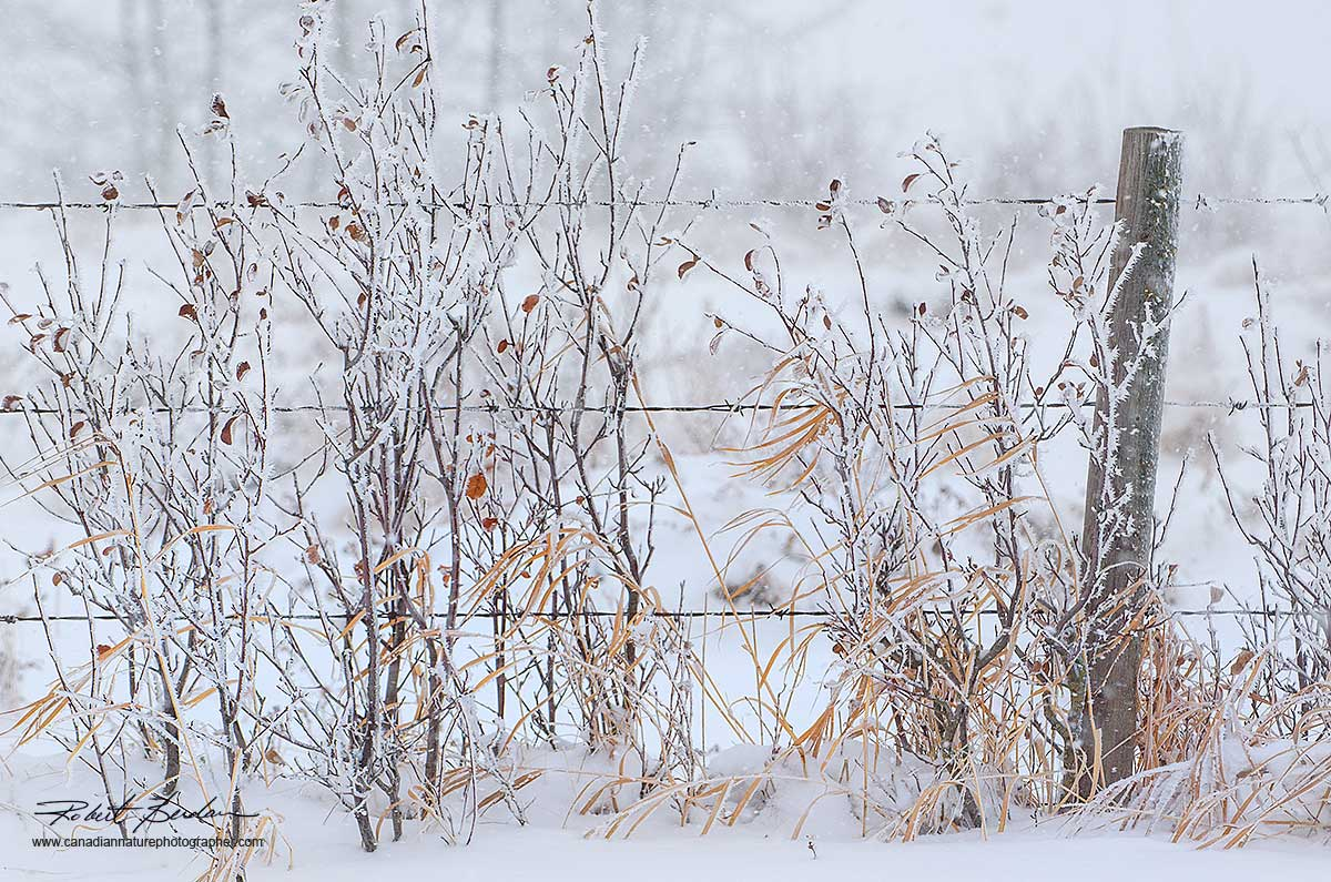 Raodside fence in winter by Robert Berdan ©