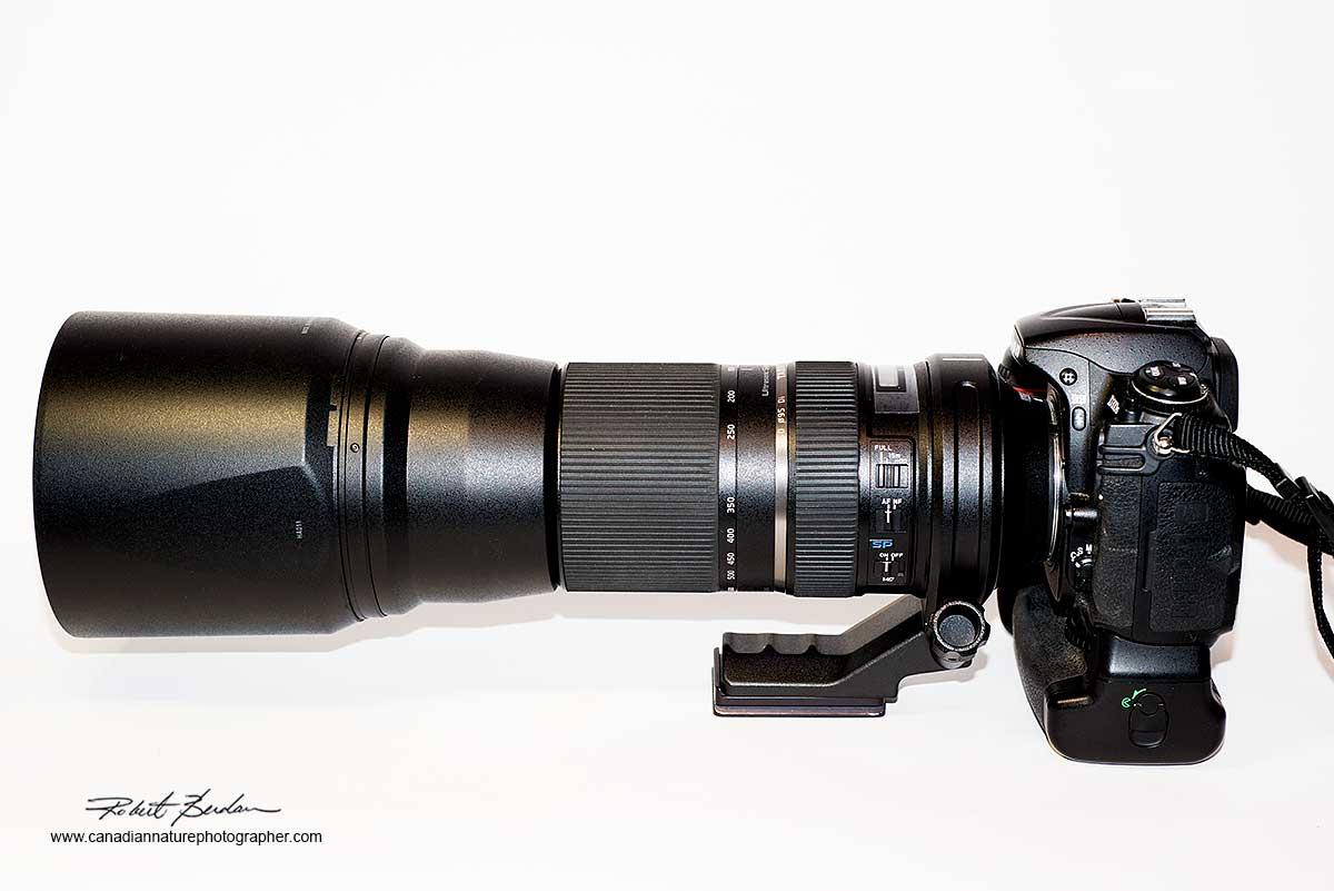 Tamron 150-600 mm lens by Robert Berdan ©