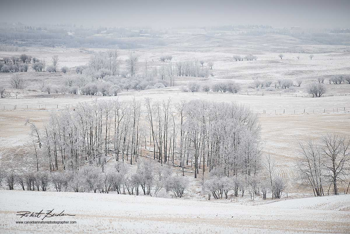 Winter Field next to Beaspaw road Calgary by Robert Berdan ©