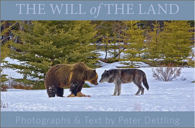 The Will of the Land book cover by Peter Dettling ©