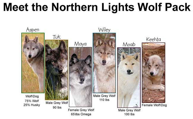 Northern Lights wolves by Robert Berdan
