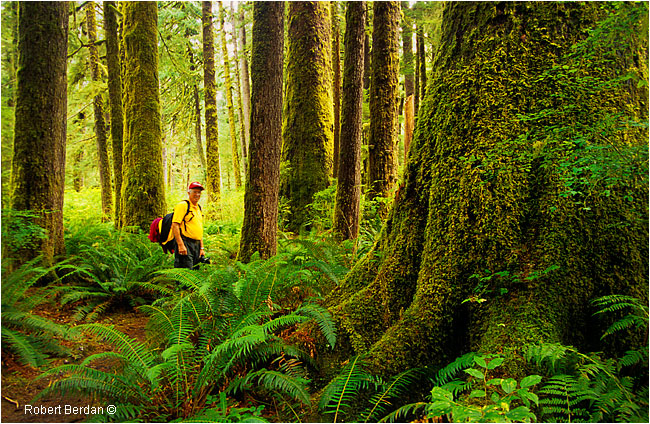 The Carmanah Valley an Ancient Rainforest on Vancouver Island