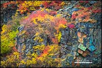 Dwarf birch and willow in autumn along cliffs adjacent to Point Lake Northwest Territories by Robert Berdan