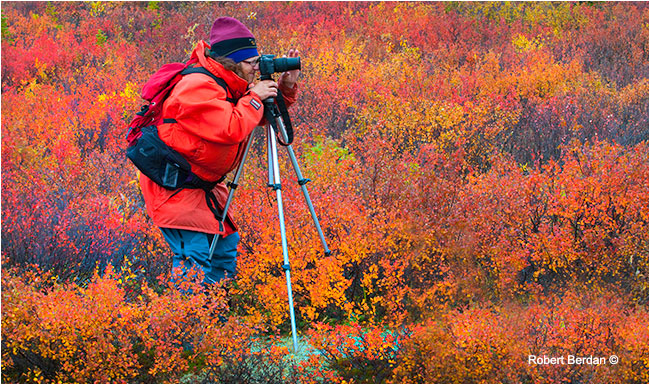 Photographer\artist using a tripod to photograph on the autumn tundra by Robert Berdan ©