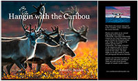 Hangin with the Caribou a new book and music CD by Robert and Donna Berdan ©