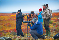 Photographers on the tundra take aim at barren lands caribou by Robert Berdan ©