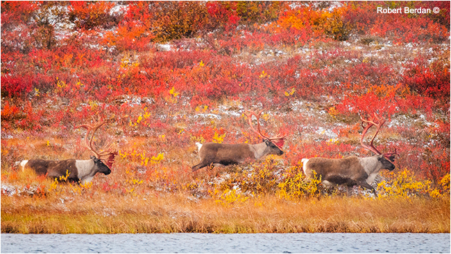 Caribou Point lake by Robert Berdan ©