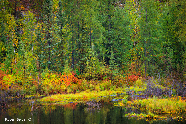 boreal forest next to the Ingraham trail by Robert Berdan
