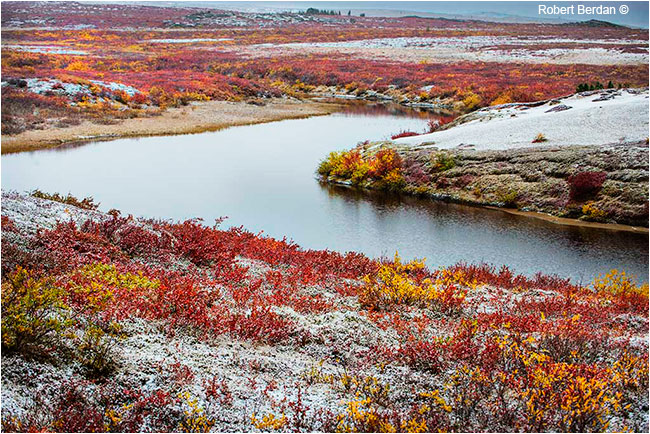 Tundra and fresh snow by Robert Berdan ©