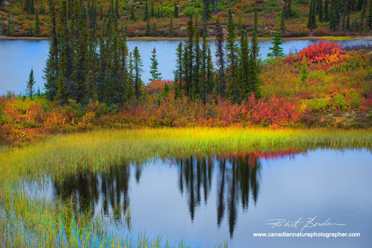 Pond at Birthday Point with red dwarf birch and white spruce. by Robert Berdan ©