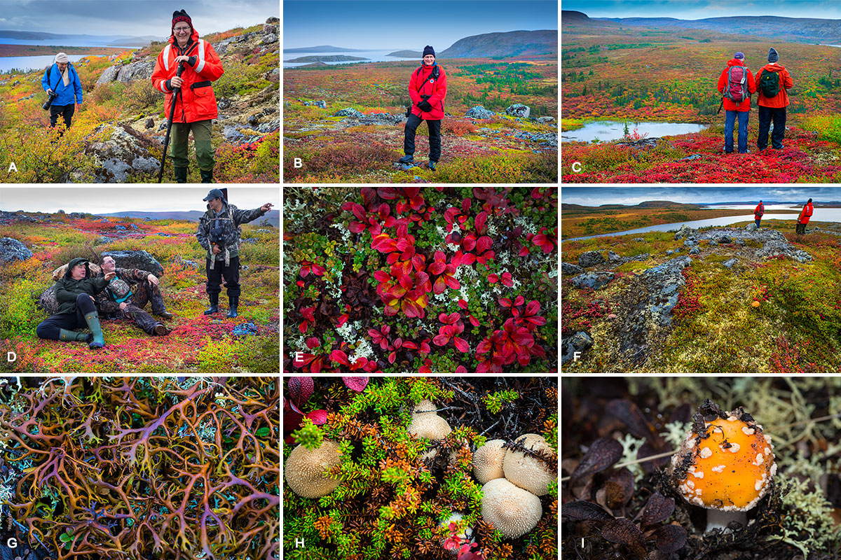 A) Overlooking Pirates Bay Hälle Flygare in front and Lou Stryer in the background. B) Thomas Frank C) Rick McKelvery and John Reid. D) Guides Chuck Rockwell, Egan Wuth and Anthony Santos E) Bearberry leaves F) Overlooking Point lake G) Reindeer Lichen H) Gem studded Puffballs I) Fly Amanita mushroom (Aminita muscaria) by Robert Berdan ©