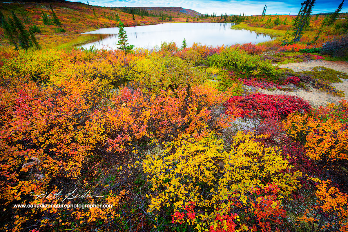 Tundra pond surrounded by dwarf birch, willow and bear berry by Robert Berdan ©