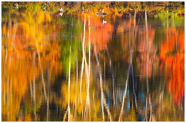 Autumn reflections by Robert Berdan ©
