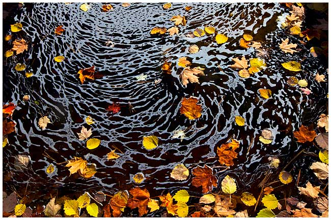 Autumn leaves by Robert Berdan ©