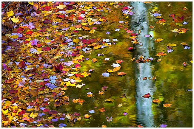 Autumn leaves reflected in water by Robert Berdan ©