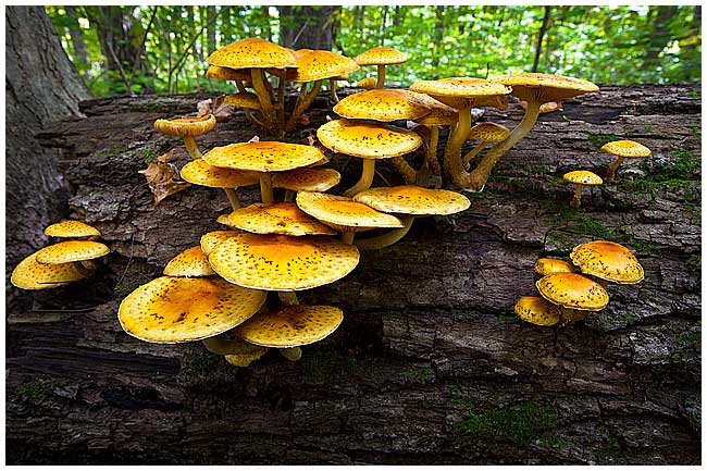 Mushrooms by Robert Berdan ©