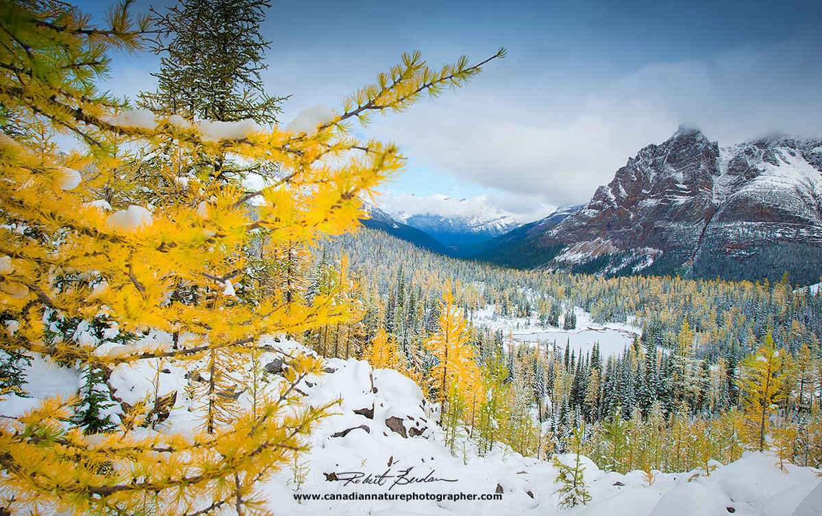 Schäffer lake and larches in Autumn with snowfall by Robert Berdan ©